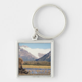 brown bear, Ursus arctos, grizzly bear, Ursus 2 Silver-Colored Square Key Ring