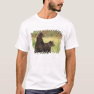 brown bear, Ursus arctos, grizzly bear, Ursus 2 T-Shirt