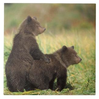 brown bear, Ursus arctos, grizzly bear, Ursus 2 Tile