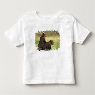 brown bear, Ursus arctos, grizzly bear, Ursus 2 Toddler T-Shirt
