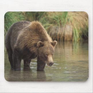 brown bear, Ursus arctos, grizzly bear, Ursus 3 Mouse Pad