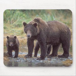 brown bear, Ursus arctos, grizzly bear, Ursus 3 Mousepad
