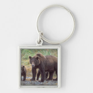 brown bear, Ursus arctos, grizzly bear, Ursus 3 Silver-Colored Square Key Ring