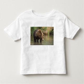 brown bear, Ursus arctos, grizzly bear, Ursus 3 Toddler T-Shirt