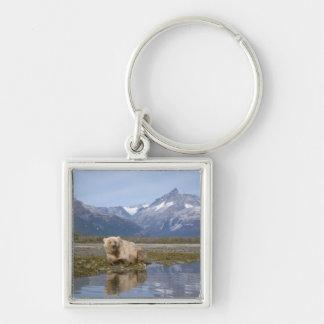 brown bear, Ursus arctos, grizzly bear, Ursus 4 Key Chain