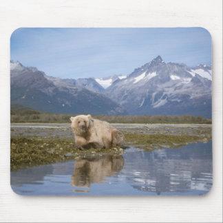 brown bear, Ursus arctos, grizzly bear, Ursus 4 Mouse Pad