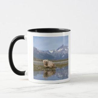 brown bear, Ursus arctos, grizzly bear, Ursus 4 Mug