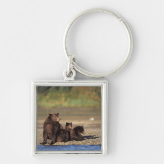 brown bear, Ursus arctos, grizzly bear, Ursus 4 Silver-Colored Square Key Ring