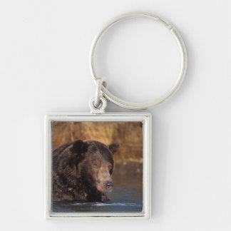 brown bear, Ursus arctos, grizzly bear, Ursus 5 Silver-Colored Square Key Ring