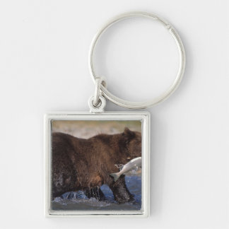 brown bear, Ursus arctos, grizzly bear, Ursus 6 Key Ring