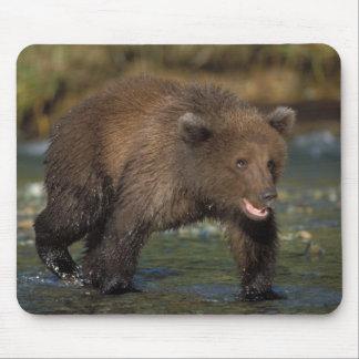 brown bear, Ursus arctos, grizzly bear, Ursus 6 Mouse Pads