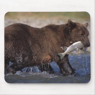 brown bear, Ursus arctos, grizzly bear, Ursus 6 Mousepads