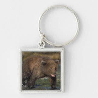 brown bear, Ursus arctos, grizzly bear, Ursus 6 Silver-Colored Square Key Ring