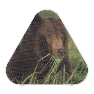 brown bear, Ursus arctos, grizzly bear, Ursus 7
