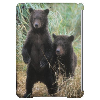 brown bear, Ursus arctos, grizzly bear, Ursus 7 2