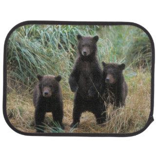 brown bear, Ursus arctos, grizzly bear, Ursus 7 2 Car Mat