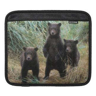 brown bear, Ursus arctos, grizzly bear, Ursus 7 2 iPad Sleeve