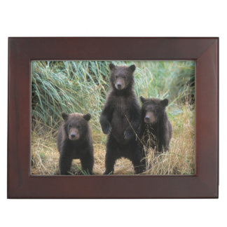 brown bear, Ursus arctos, grizzly bear, Ursus 7 2 Keepsake Box