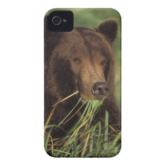 brown bear, Ursus arctos, grizzly bear, Ursus 7 Case-Mate iPhone 4 Case