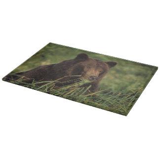 brown bear, Ursus arctos, grizzly bear, Ursus 7 Cutting Board