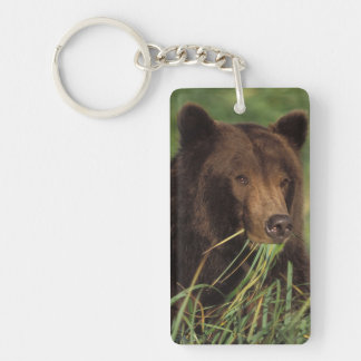 brown bear, Ursus arctos, grizzly bear, Ursus 7 Double-Sided Rectangular Acrylic Key Ring