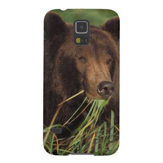 brown bear, Ursus arctos, grizzly bear, Ursus 7 Galaxy S5 Cases