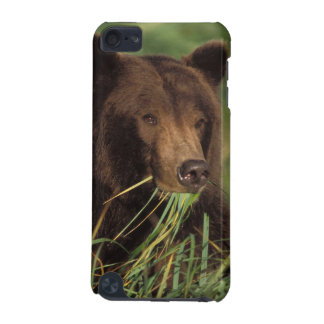 brown bear, Ursus arctos, grizzly bear, Ursus 7 iPod Touch (5th Generation) Cases