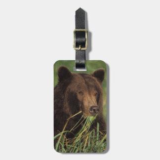 brown bear, Ursus arctos, grizzly bear, Ursus 7 Luggage Tag