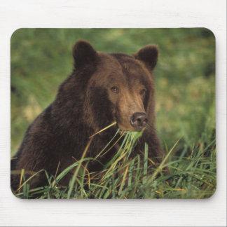 brown bear, Ursus arctos, grizzly bear, Ursus 7 Mouse Pad