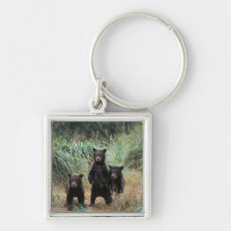 brown bear, Ursus arctos, grizzly bear, Ursus 7 Silver-Colored Square Key Ring