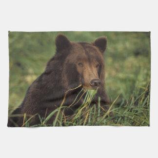 brown bear, Ursus arctos, grizzly bear, Ursus 7 Tea Towel