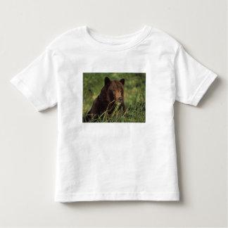 brown bear, Ursus arctos, grizzly bear, Ursus 7 Toddler T-Shirt