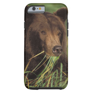 brown bear, Ursus arctos, grizzly bear, Ursus 7 Tough iPhone 6 Case