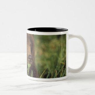 brown bear, Ursus arctos, grizzly bear, Ursus 7 Two-Tone Coffee Mug
