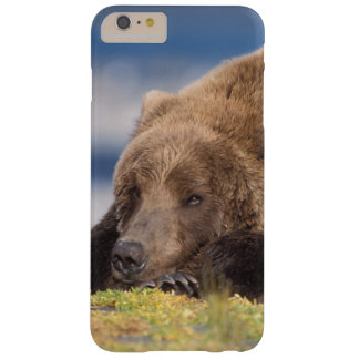 brown bear, Ursus arctos, grizzly bear, Ursus 8 Barely There iPhone 6 Plus Case