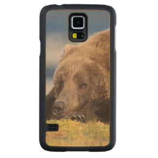 brown bear, Ursus arctos, grizzly bear, Ursus 8 Carved Maple Galaxy S5 Case