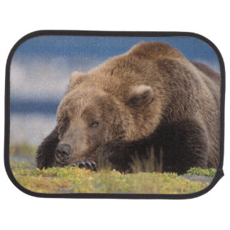 brown bear, Ursus arctos, grizzly bear, Ursus 8 Floor Mat