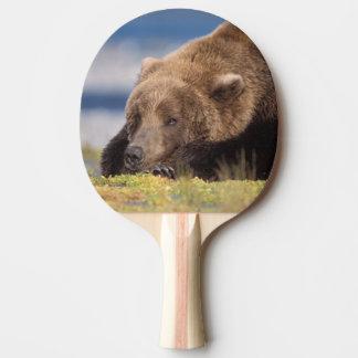 brown bear, Ursus arctos, grizzly bear, Ursus 8 Ping Pong Paddle