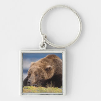 brown bear, Ursus arctos, grizzly bear, Ursus 8 Silver-Colored Square Key Ring