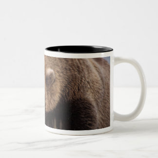 brown bear, Ursus arctos, grizzly bear, Ursus 8 Two-Tone Coffee Mug