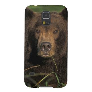 brown bear, Ursus arctos, grizzly bear, Ursus 9 Case For Galaxy S5