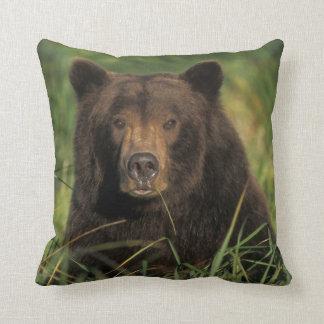 brown bear, Ursus arctos, grizzly bear, Ursus 9 Cushion