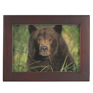 brown bear, Ursus arctos, grizzly bear, Ursus 9 Keepsake Box
