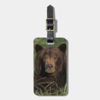 brown bear, Ursus arctos, grizzly bear, Ursus 9 Luggage Tag