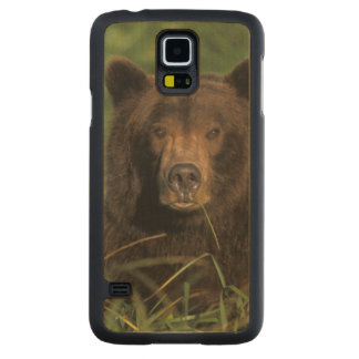 brown bear, Ursus arctos, grizzly bear, Ursus 9 Maple Galaxy S5 Slim Case