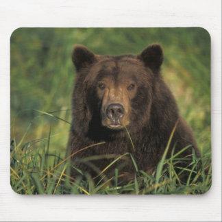 brown bear, Ursus arctos, grizzly bear, Ursus 9 Mouse Pad