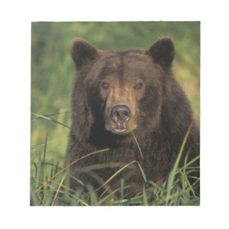 brown bear, Ursus arctos, grizzly bear, Ursus 9 Notepad