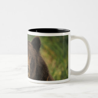 brown bear, Ursus arctos, grizzly bear, Ursus 9 Two-Tone Coffee Mug