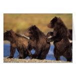 brown bear, Ursus arctos, grizzly bear, Ursus Cards