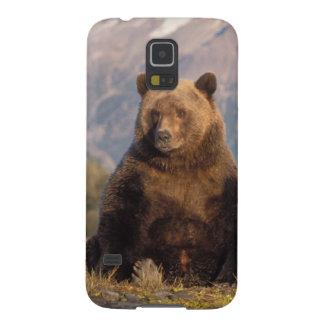 brown bear, Ursus arctos, grizzly bear, Ursus Galaxy S5 Cover